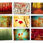 Autumn photography wall decor