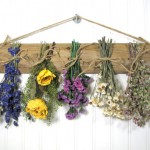 Dry Flower wall decoration