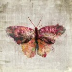 Polymorphism  Butterfly Wall Art