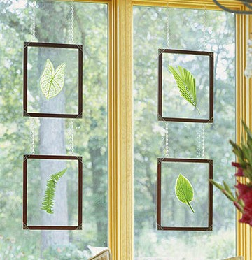 Natural Leaf Wall Art