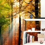 Golden Autumn – Photo Wallpaper